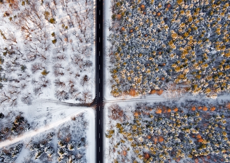 Puszcza Sandomierska z lotu ptaka - leśny parking